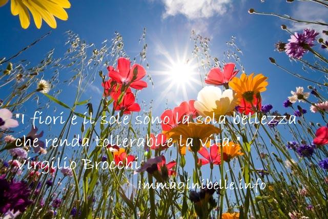 Fiori e sole citazioni immagini belle - Fiori da giardino al sole ...