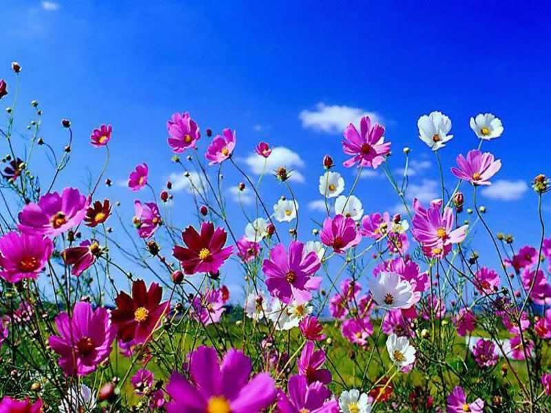 Il Fiore - Lessons - Tes Teach