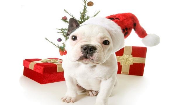 Immagini belle natale le pi belle foto natalizie for Animali a natale
