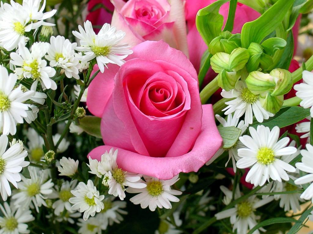 Immagini belle fiori immagini belle for Foto di rose bellissime
